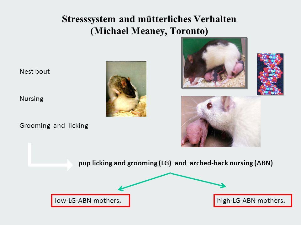 Stresssystem and mütterliches Verhalten (Michael Meaney, Toronto) Nest bout Nursing Grooming and licking pup licking and grooming (LG) and arched-back