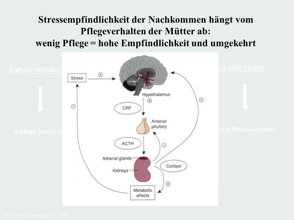 Stressempfindlichkeit der Nachkommen hängt vom Pflegeverhalten der Mütter ab: wenig Pflege = hohe Empfindlichkeit und umgekehrt high-LG-ABN Mütter mäß