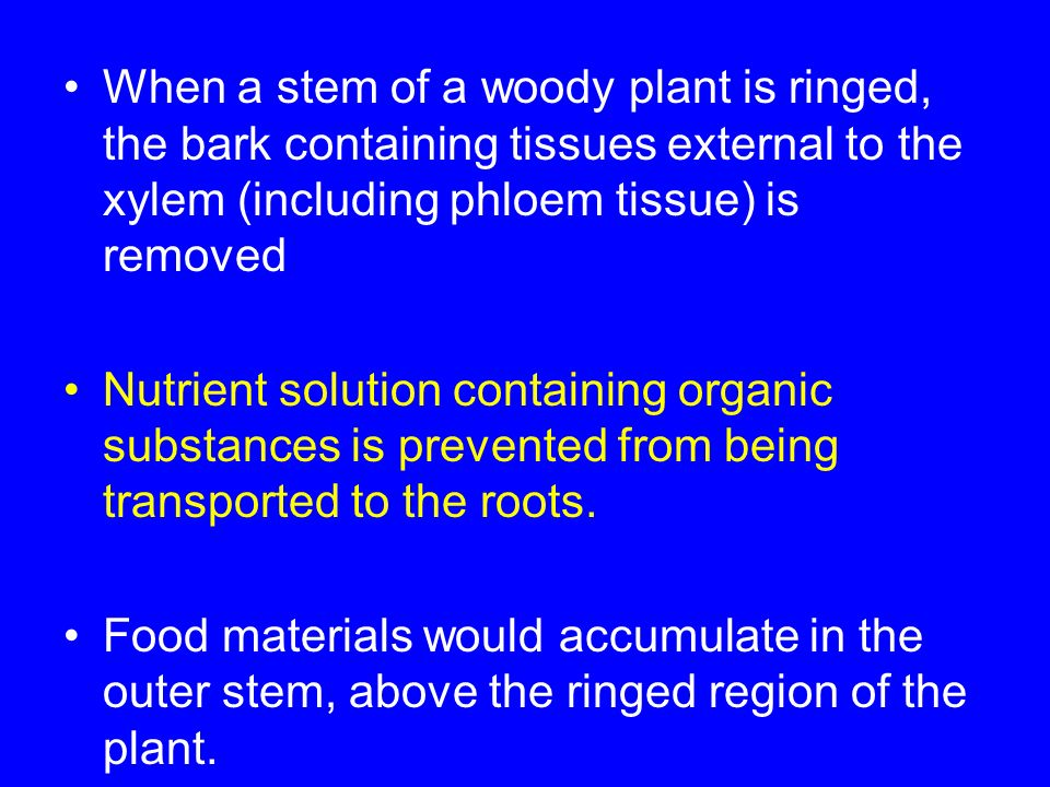 When a stem of a woody plant is ringed, the bark containing tissues external to the xylem (including phloem tissue) is removed Nutrient solution conta