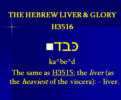THE HEBREW LIVER & GLORY H3516 כּבד ka^be^d The same as H3515; the liver (as the heaviest of the viscera): - liver.