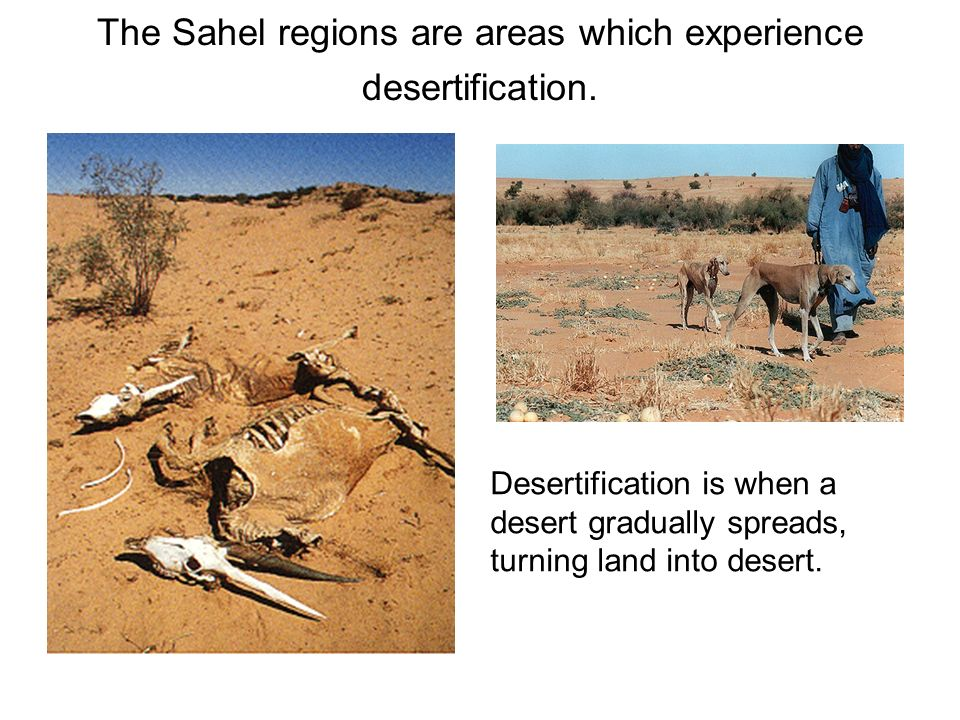 The Sahel regions are areas which experience desertification. Desertification is when a desert gradually spreads, turning land into desert.
