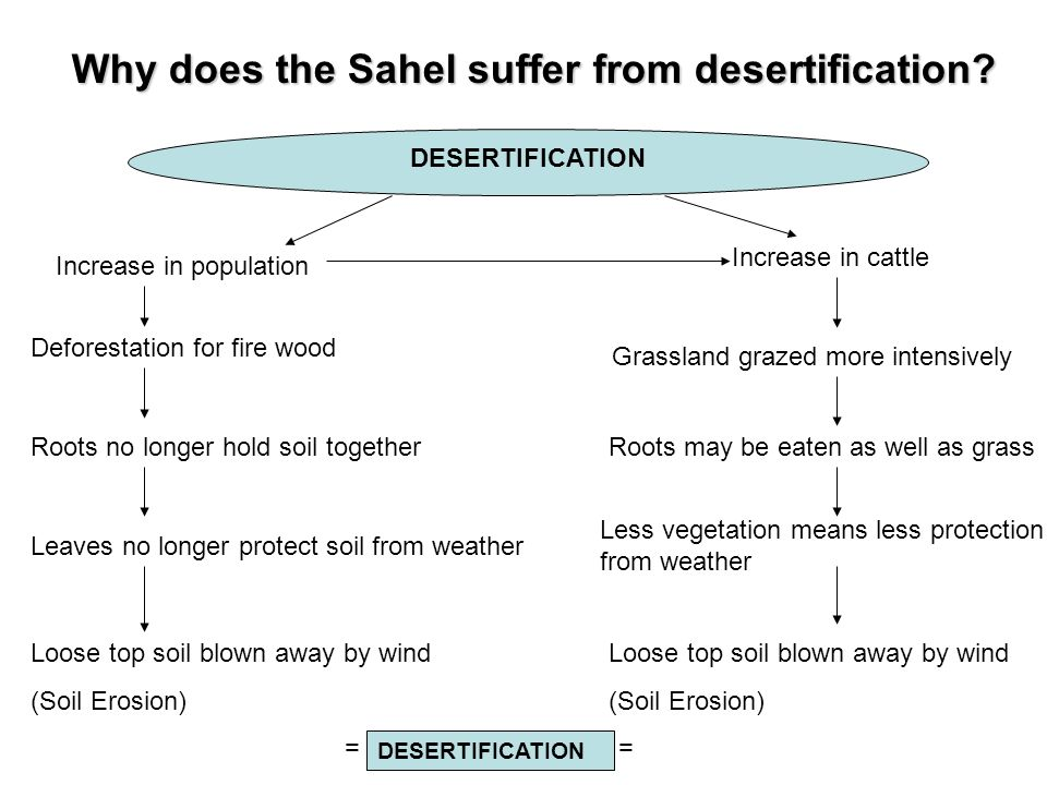 Why does the Sahel suffer from desertification? DESERTIFICATION Increase in population Increase in cattle Deforestation for fire wood Grassland grazed