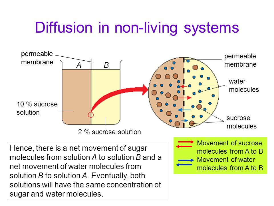 Diffusion in living organisms Diffusion in living organisms occurs continuously and it does not always take place across a membrane (e.g.