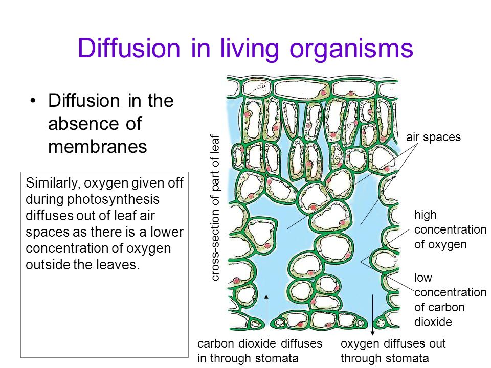 Osmosis in living organisms What happens to plant cells when they are placed in concentrated solution.