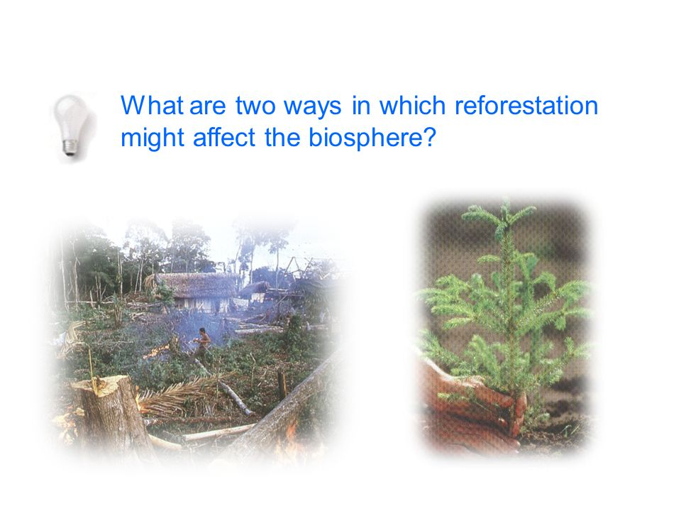 What are two ways in which reforestation might affect the biosphere?