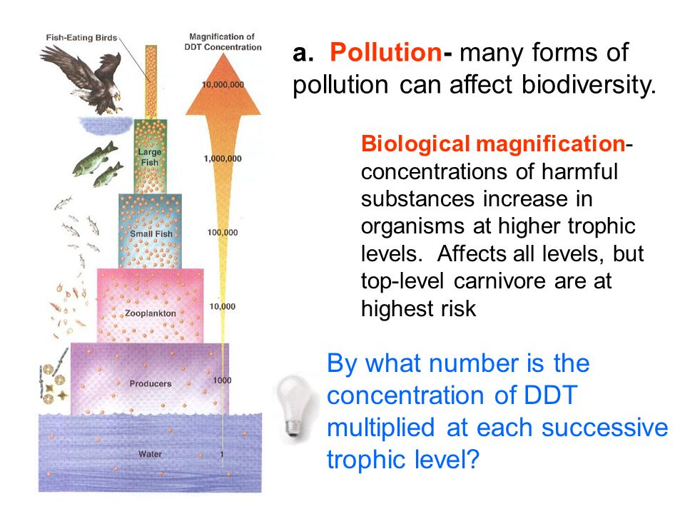 a. Pollution- many forms of pollution can affect biodiversity. Biological magnification- concentrations of harmful substances increase in organisms at