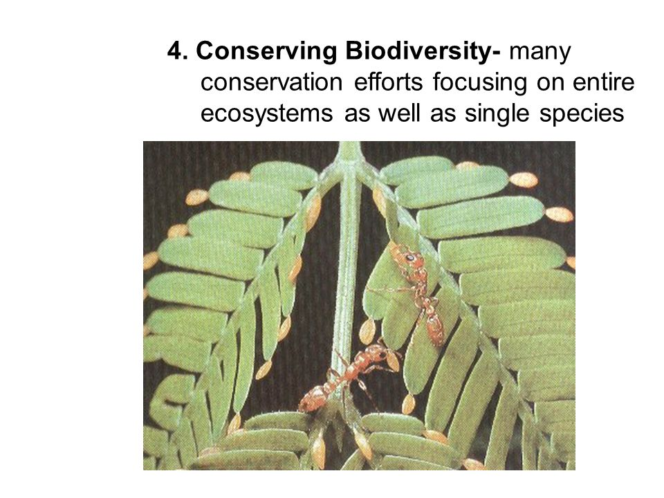 4. Conserving Biodiversity- many conservation efforts focusing on entire ecosystems as well as single species