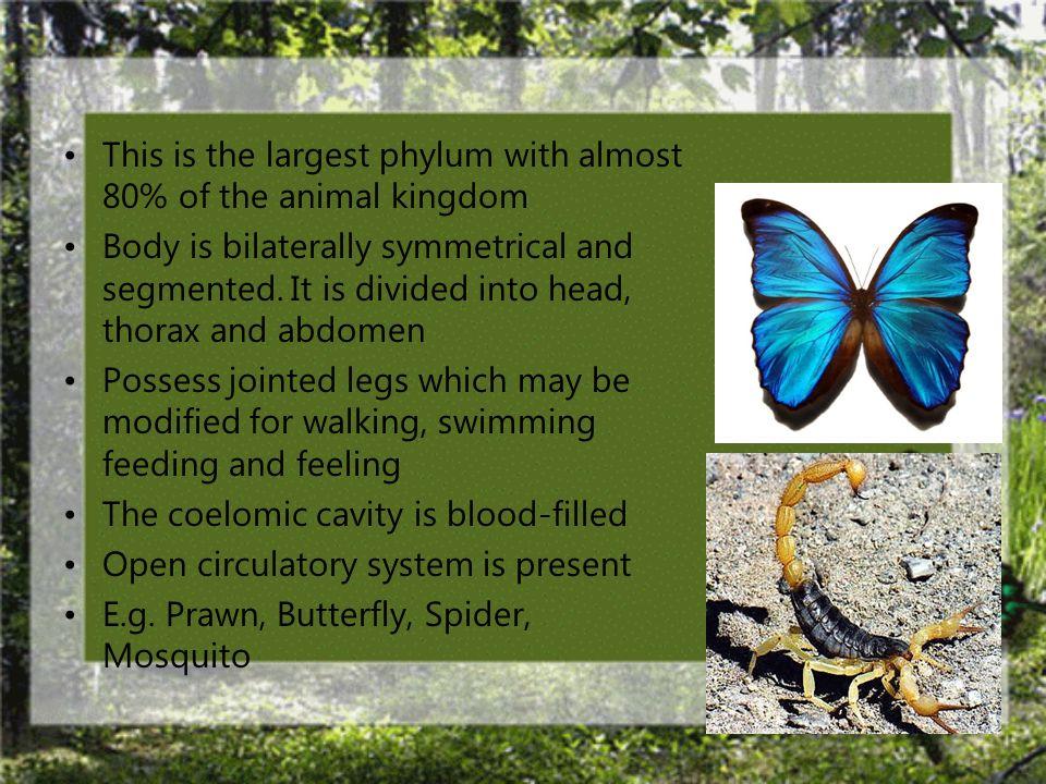 Phylum Arthropoda (animals with jointed legs)