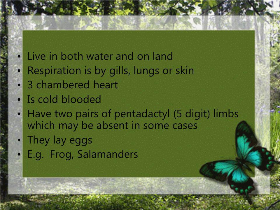 Class: Amphibia
