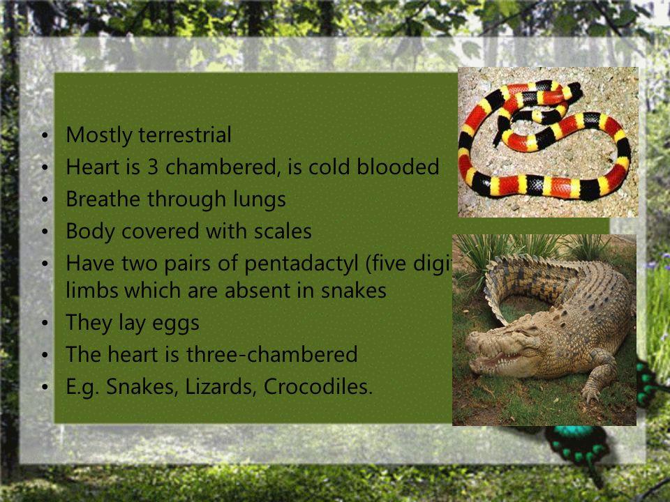 Class: Reptilia