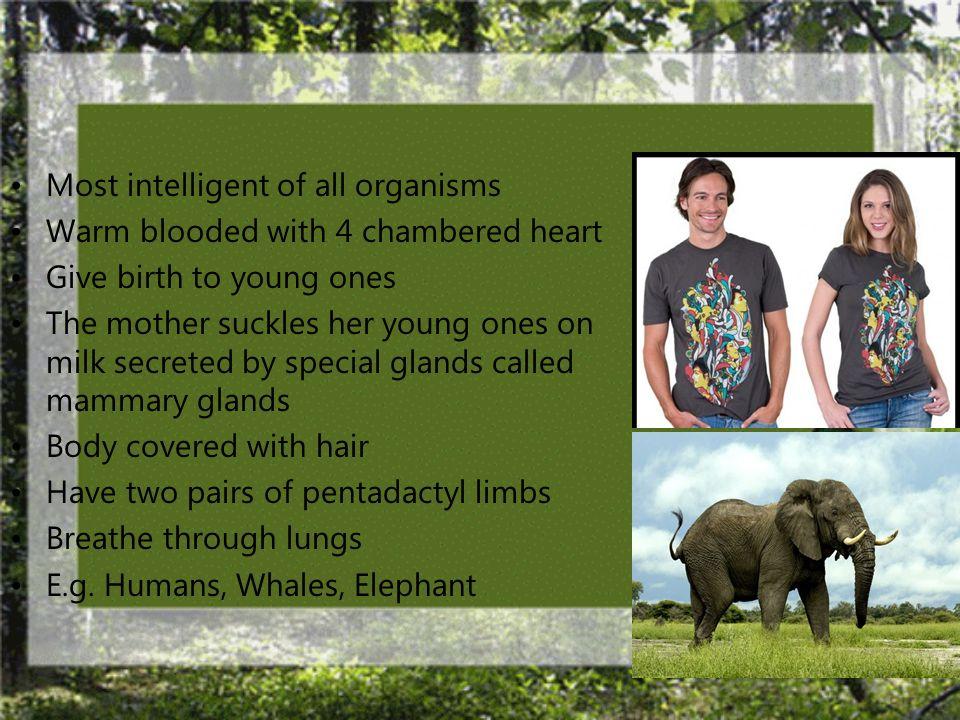 Class: Mammalia (Mammals)