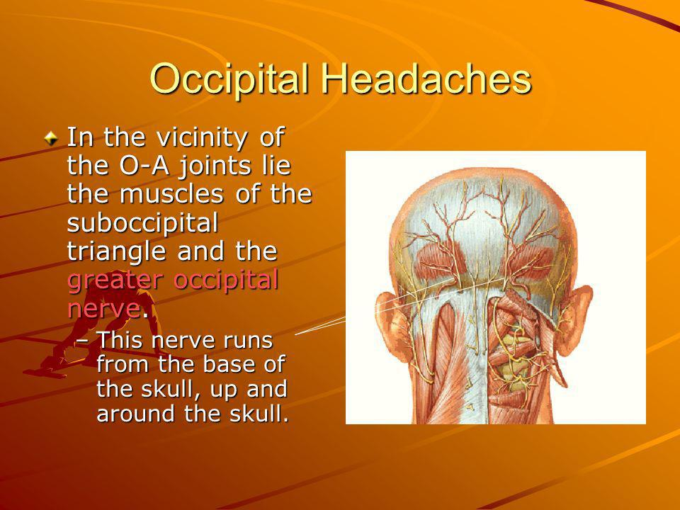 Occipital Headaches In the vicinity of the O-A joints lie the muscles of the suboccipital triangle and the greater occipital nerve. –This nerve runs f