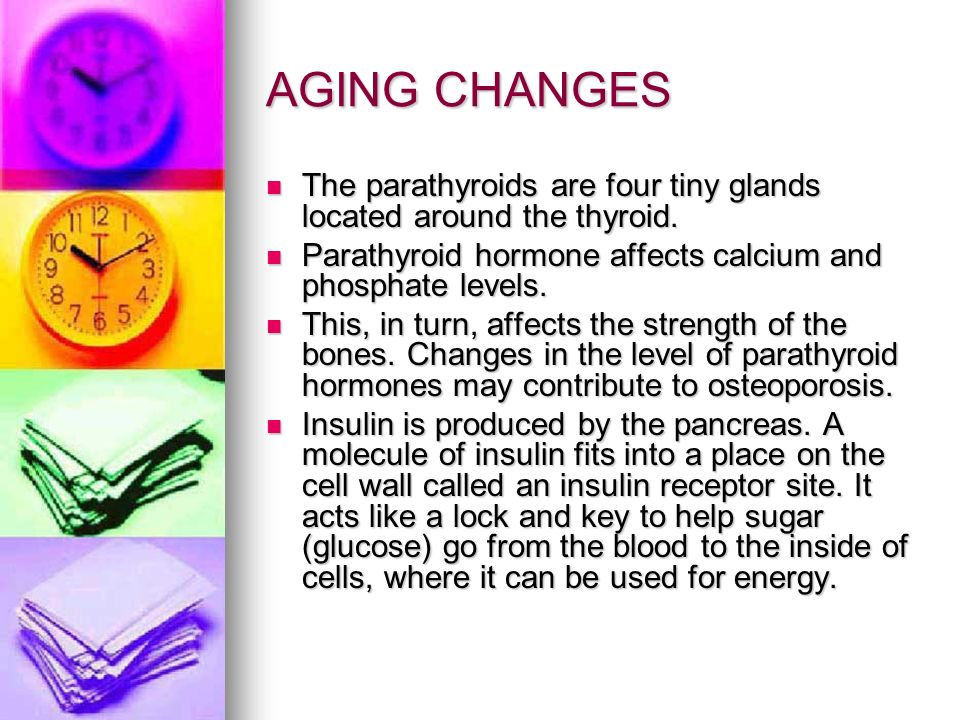 AGING CHANGES The parathyroids are four tiny glands located around the thyroid. The parathyroids are four tiny glands located around the thyroid. Para