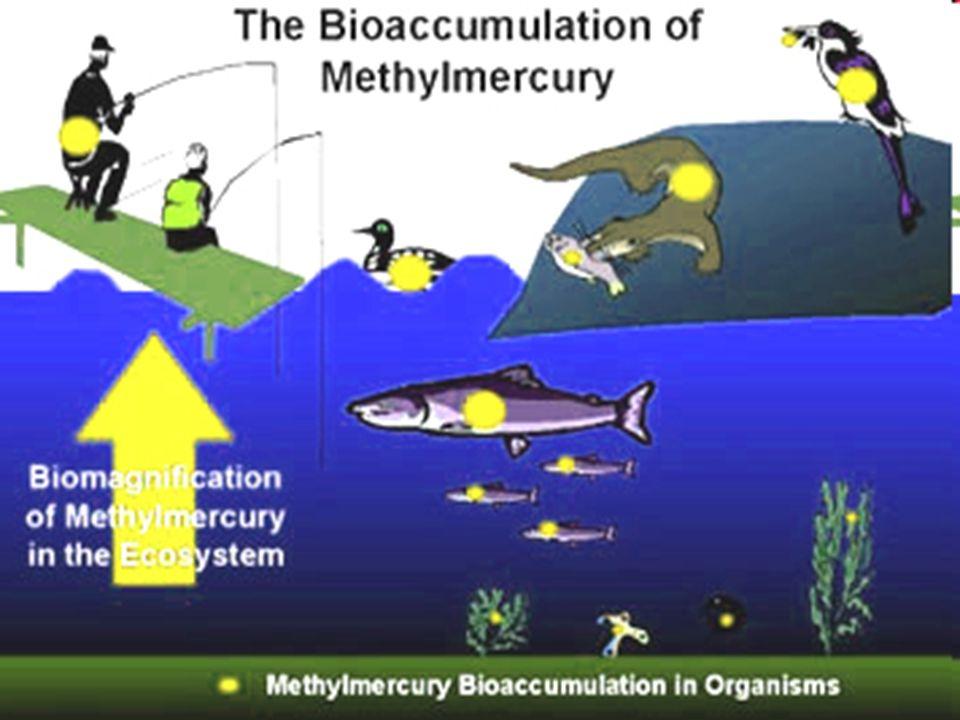 The Aquatic Mercury Cycle