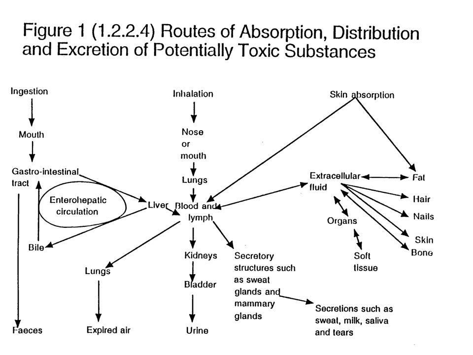 2.2. Fase Toksokinetik : Hanya sebagian dari jumlah zat yang diabsorpsi mencapai organ target suatu zat toksis di dalam tubuh organisme, yakni di loka