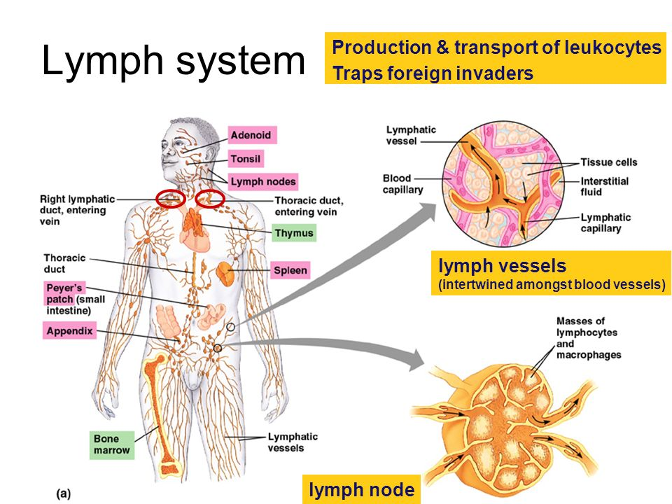 Avenues of attack Points of entry –digestive system –respiratory system –urogenital tract –break in skin Routes of attack –circulatory system –lymph s