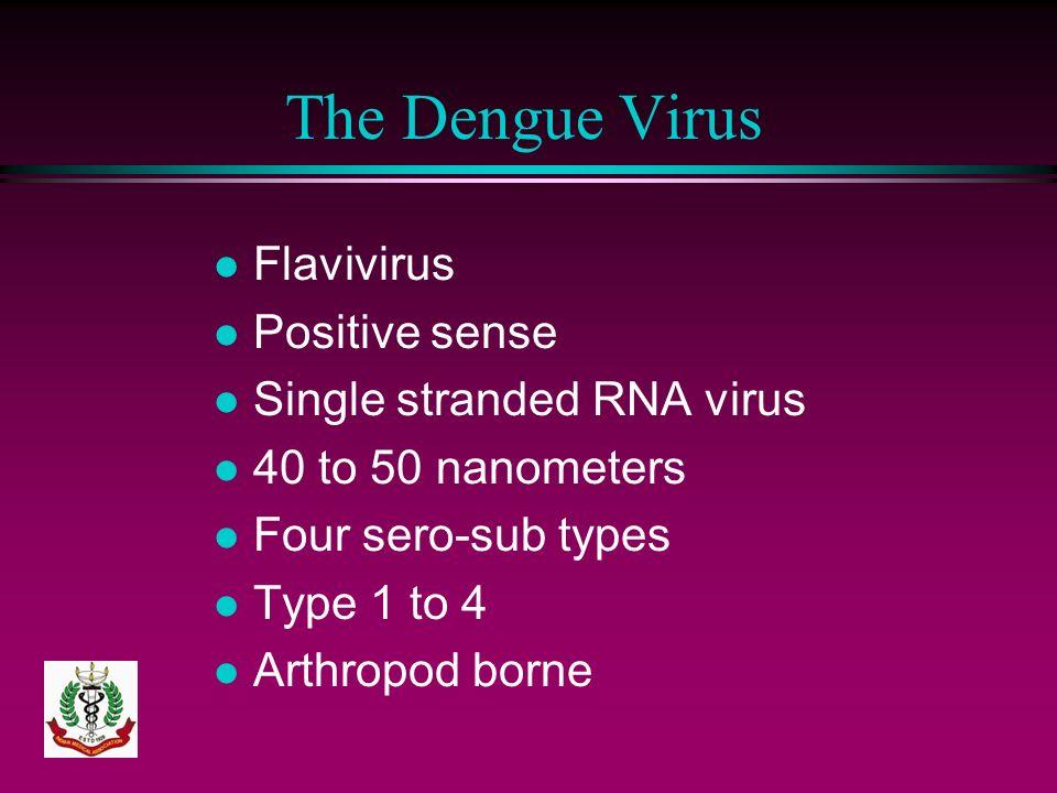 The Dengue Virus l Flavivirus l Positive sense l Single stranded RNA virus l 40 to 50 nanometers l Four sero-sub types l Type 1 to 4 l Arthropod borne