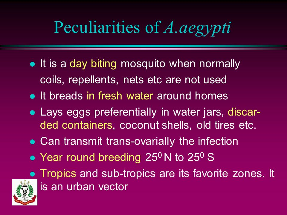 Peculiarities of A.aegypti l It is a day biting mosquito when normally coils, repellents, nets etc are not used l It breads in fresh water around home