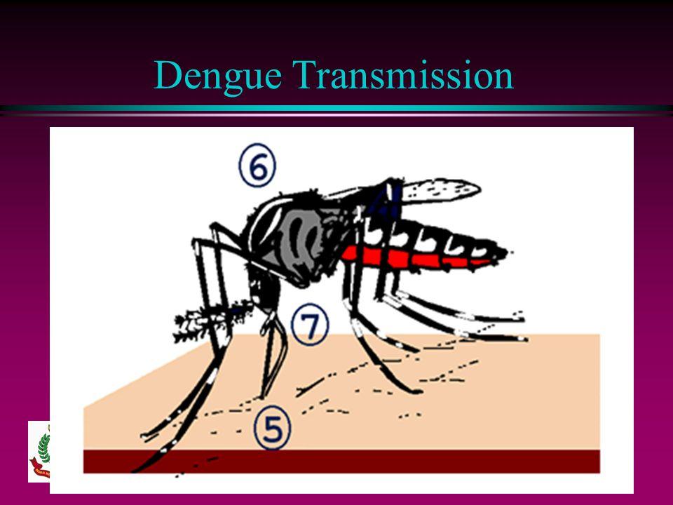 Dengue Transmission