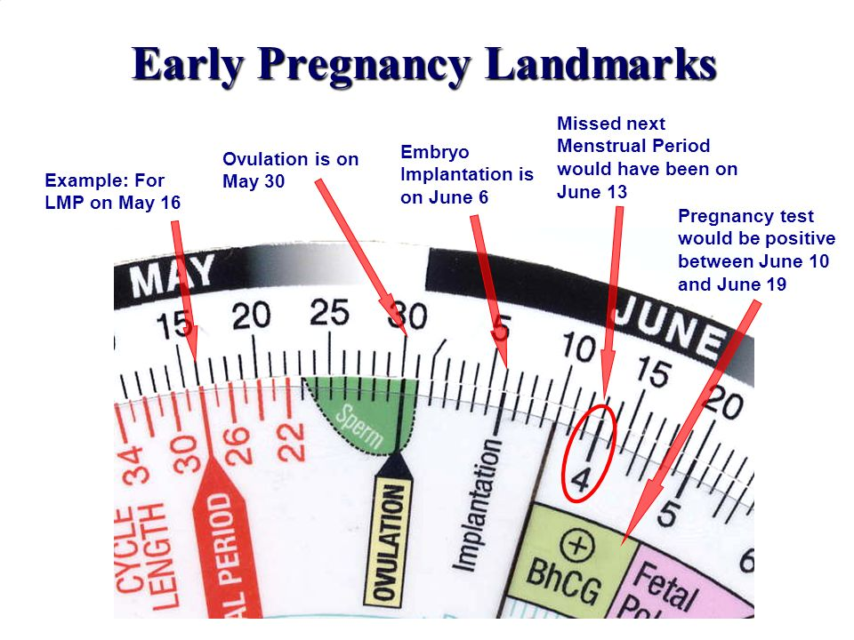 Early Pregnancy Landmarks Example: For LMP on May 16 Embryo Implantation is on June 6 Missed next Menstrual Period would have been on June 13 Pregnanc