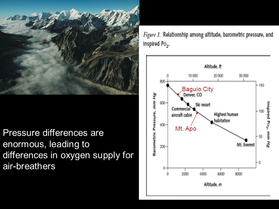 Pressure differences are enormous, leading to differences in oxygen supply for air-breathers Mt. Apo Baguio City