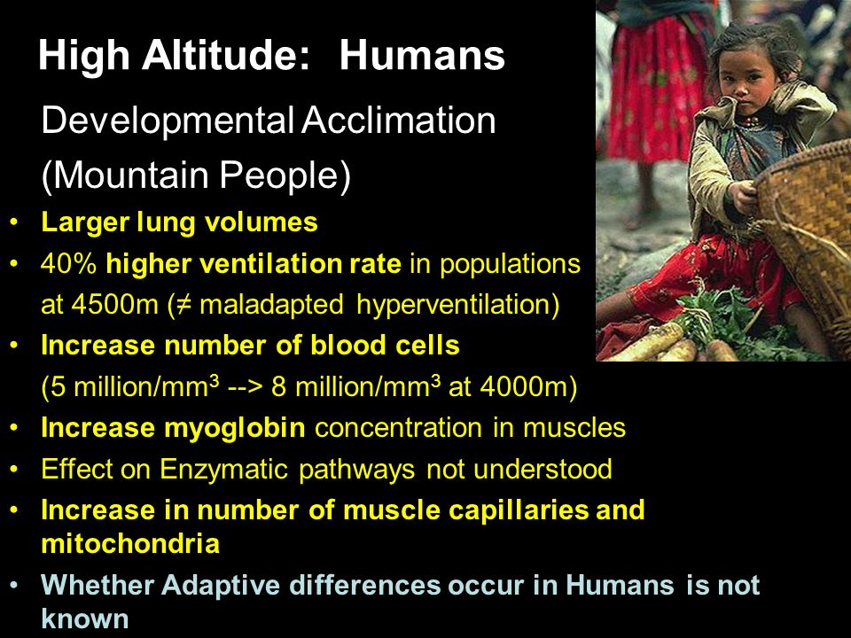 High Altitude: Humans Developmental Acclimation (Mountain People) Larger lung volumes 40% higher ventilation rate in populations at 4500m ( maladapted