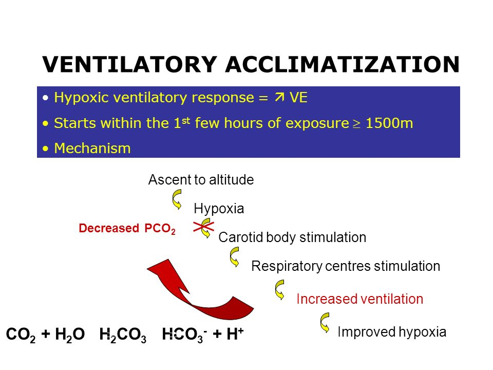 Hypoxic ventilatory response = VE Starts within the 1 st few hours of exposure 1500m Mechanism VENTILATORY ACCLIMATIZATION Ascent to altitude Hypoxia
