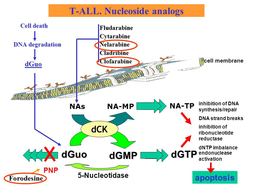T-ALL. Nucleoside analogs FludarabineCytarabineNelarabineCladribineClofarabine PNP dNTP imbalance NA-MP NA-TP dGuo dGMP dGTP 5-Nucleotidase cell membr