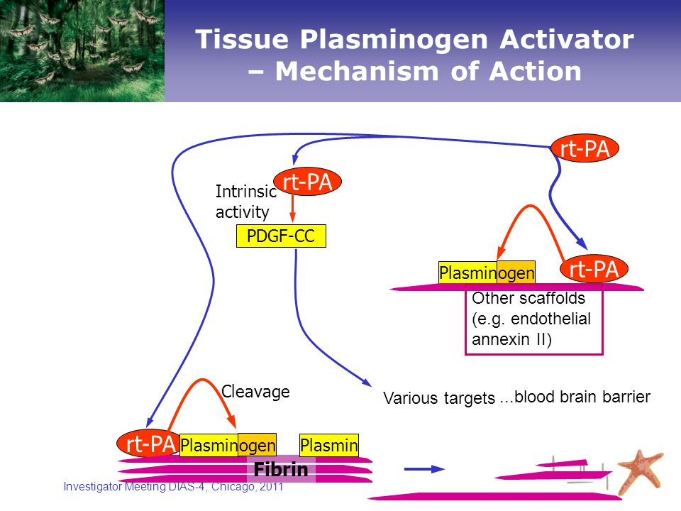 Investigator Meeting DIAS-4, Chicago, 2011 rt-PA Cleavage Fibrin Plasmin ogen Intrinsic activity Plasmin ogen rt-PA Other scaffolds (e.g. endothelial