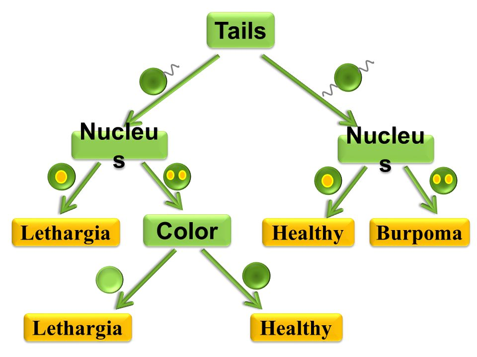 Tails Nucleu s Lethargia Color Nucleu s Healthy Burpoma Lethargia Healthy