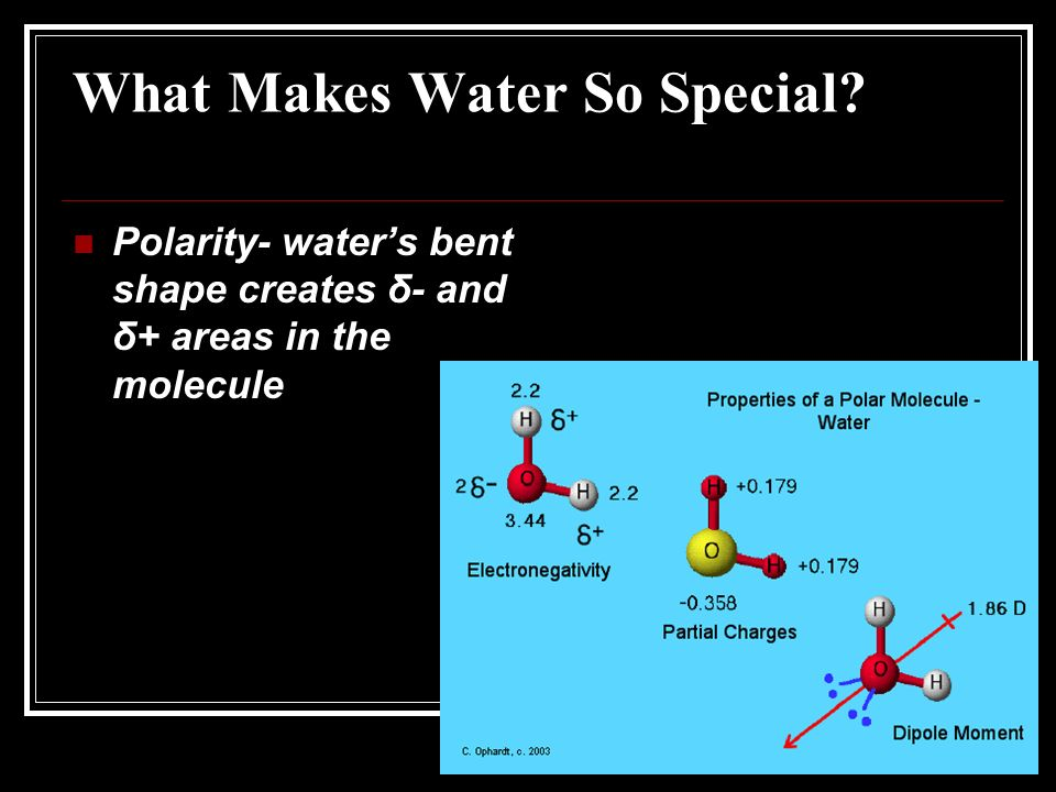 What Makes Water So Special Polarity- waters bent shape creates δ- and δ+ areas in the molecule