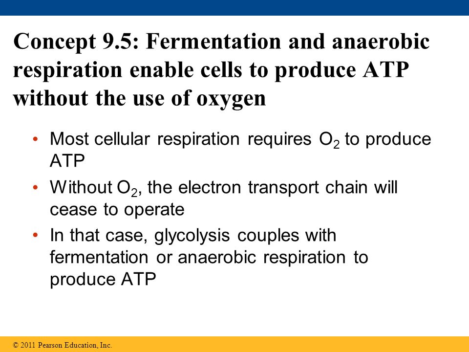 Concept 9.5: Fermentation and anaerobic respiration enable cells to produce ATP without the use of oxygen Most cellular respiration requires O 2 to pr