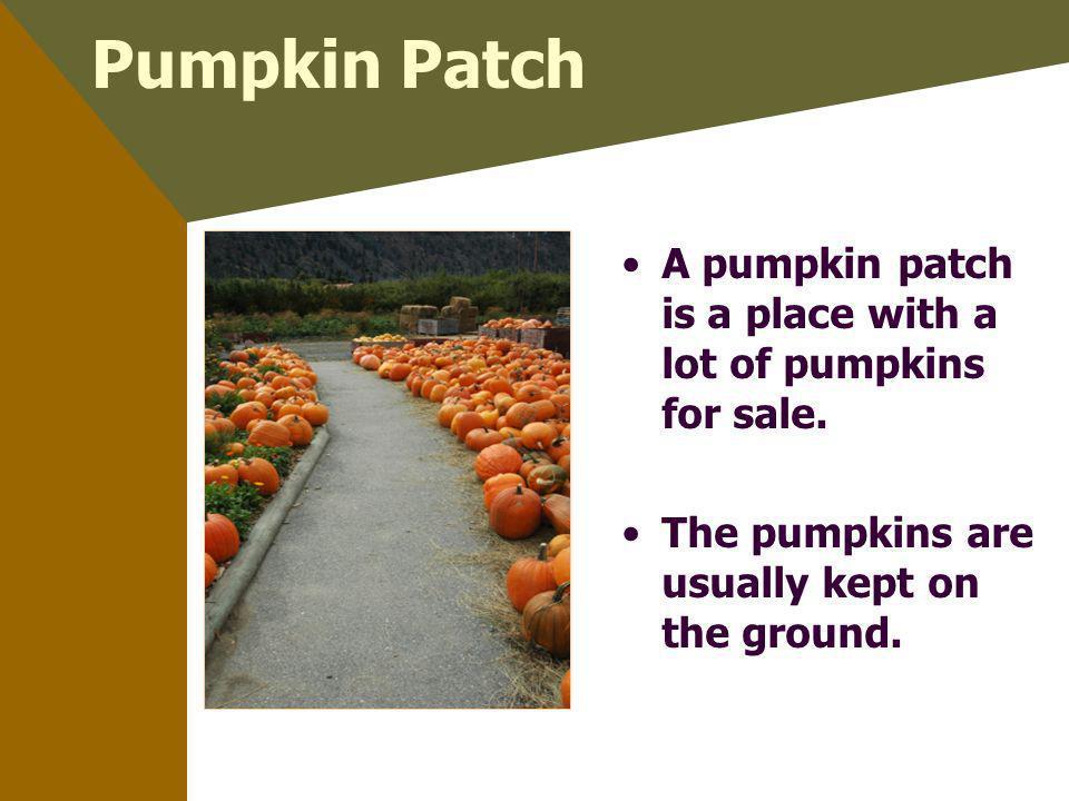 Pumpkin Patch A pumpkin patch is a place with a lot of pumpkins for sale.