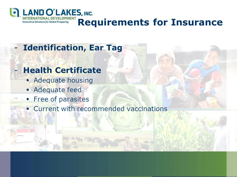 Requirements for Insurance -Identification, Ear Tag -Health Certificate Adequate housing Adequate feed Free of parasites Current with recommended vacc