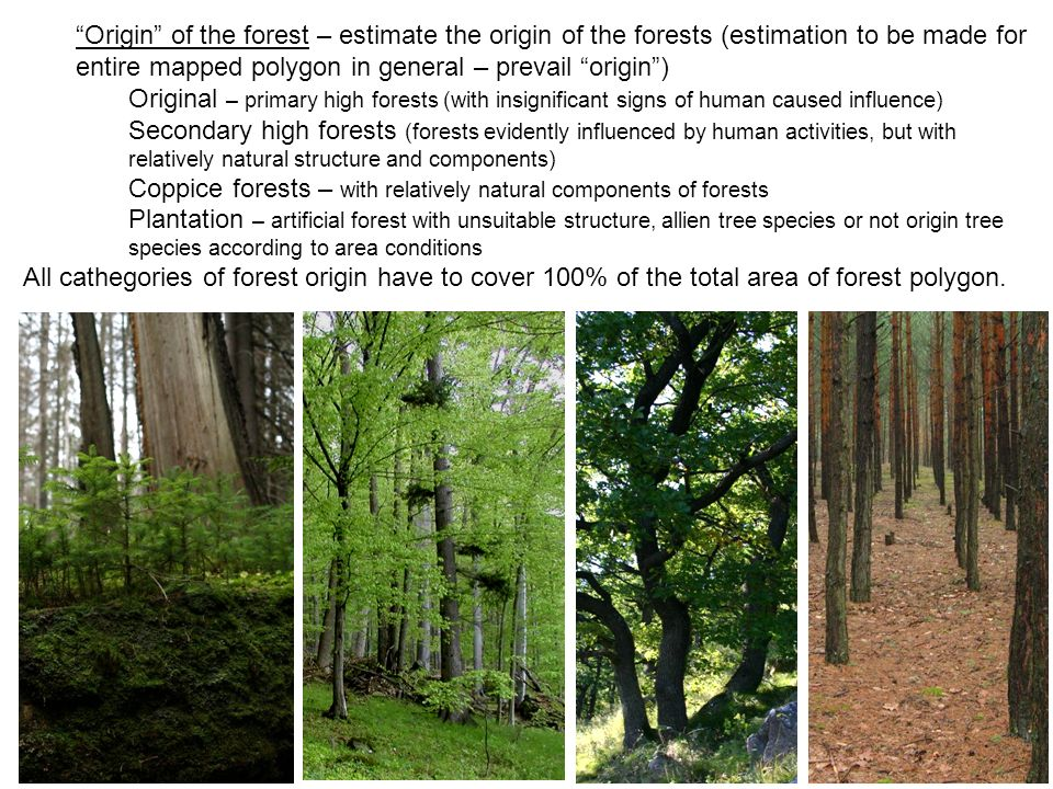 Origin of the forest – estimate the origin of the forests (estimation to be made for entire mapped polygon in general – prevail origin) Original – pri