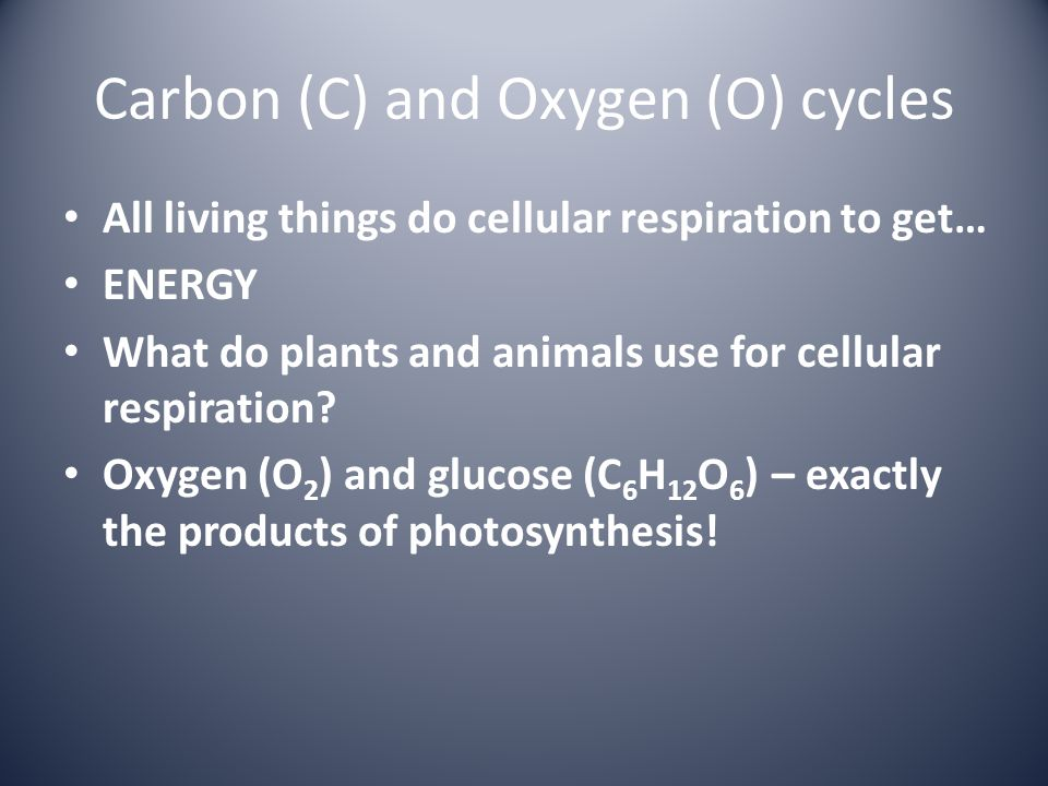 Carbon (C) and Oxygen (O) cycles All living things do cellular respiration to get… ENERGY What do plants and animals use for cellular respiration? Oxy