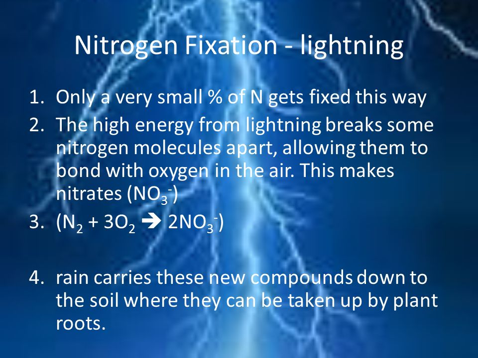 Nitrogen Fixation - lightning 1.Only a very small % of N gets fixed this way 2.The high energy from lightning breaks some nitrogen molecules apart, al