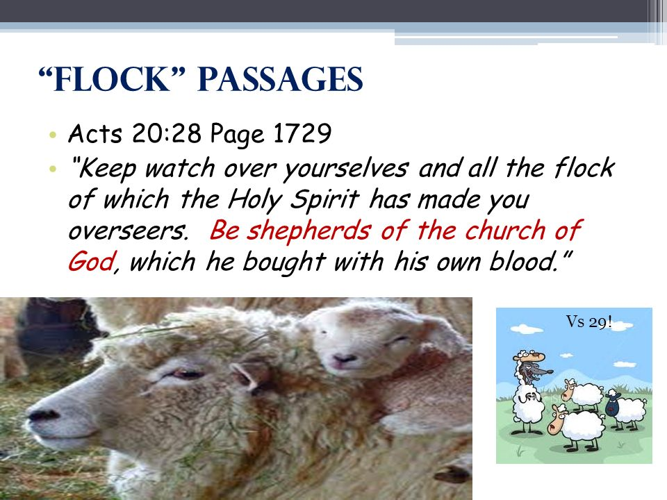 Flock Passages Acts 20:28 Page 1729 Keep watch over yourselves and all the flock of which the Holy Spirit has made you overseers.