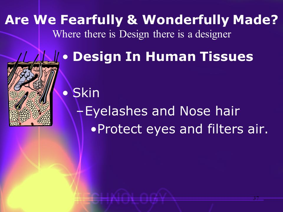 Are We Fearfully & Wonderfully Made? Where there is Design there is a designer Design In Human Tissues Skin –Eyelashes and Nose hair Protect eyes and