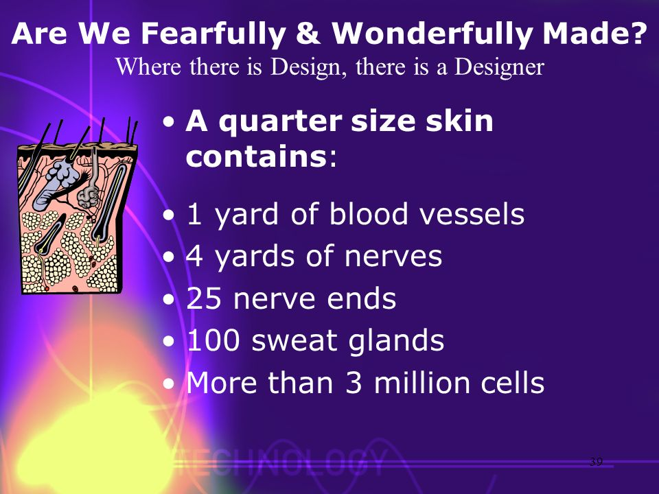 Are We Fearfully & Wonderfully Made? Where there is Design, there is a Designer A quarter size skin contains: 1 yard of blood vessels 4 yards of nerve