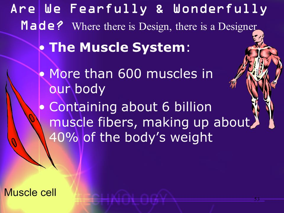 Are We Fearfully & Wonderfully Made? Where there is Design, there is a Designer The Muscle System: More than 600 muscles in our body Containing about