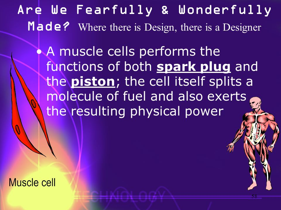 Are We Fearfully & Wonderfully Made? Where there is Design, there is a Designer A muscle cells performs the functions of both spark plug and the pisto