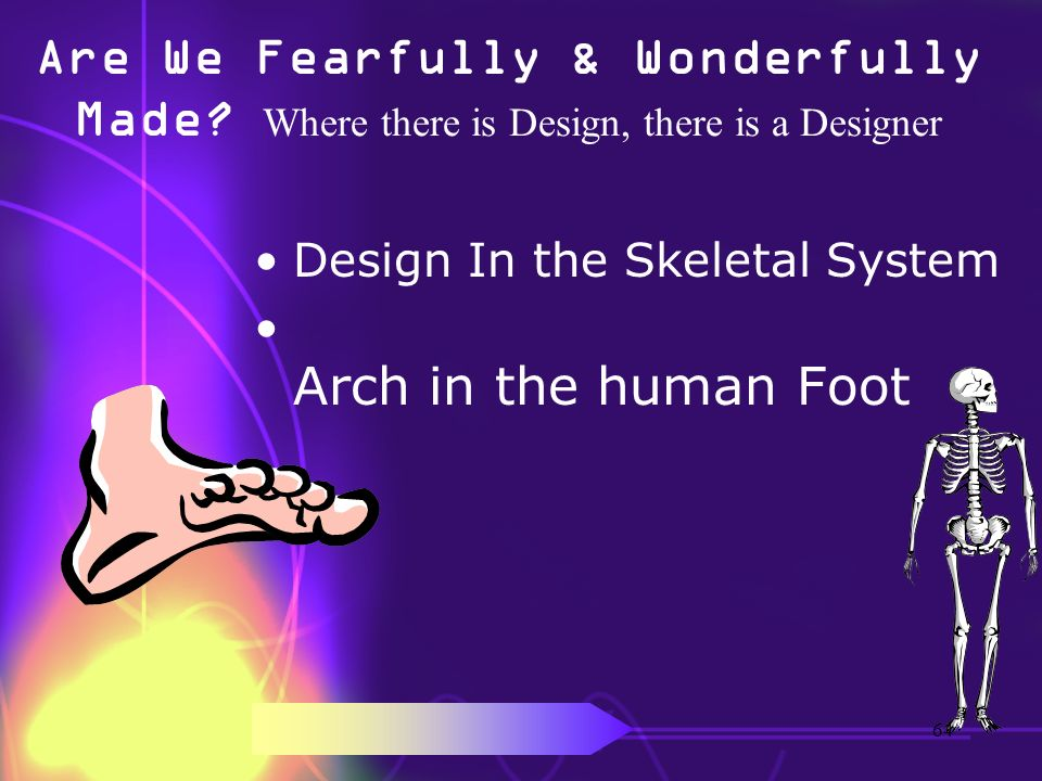 Are We Fearfully & Wonderfully Made? Where there is Design, there is a Designer Design In the Skeletal System Arch in the human Foot 64