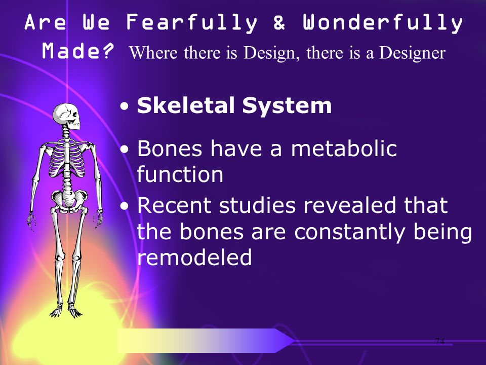 Are We Fearfully & Wonderfully Made? Where there is Design, there is a Designer Skeletal System Bones have a metabolic function Recent studies reveale