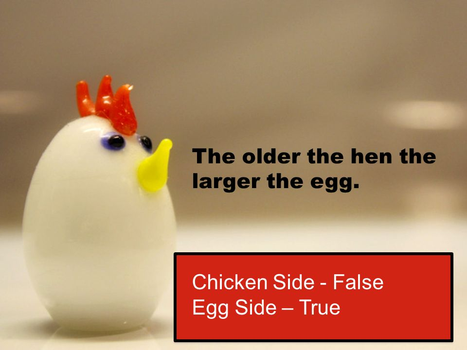 The older the hen the larger the egg. Chicken Side - False Egg Side – True