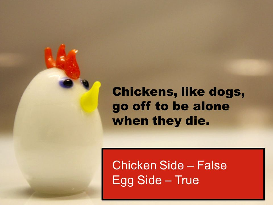 Chickens, like dogs, go off to be alone when they die. Chicken Side – False Egg Side – True