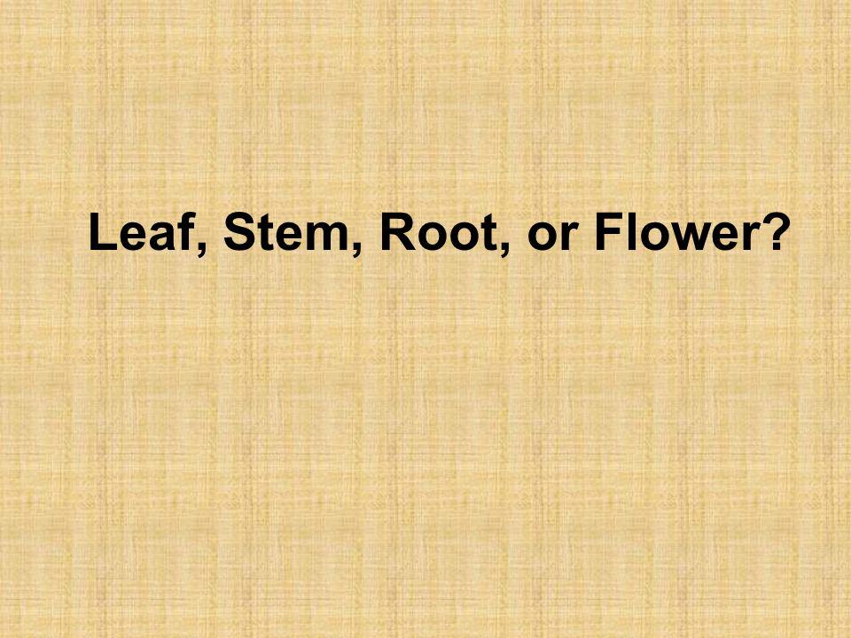 Leaf, Stem, Root, or Flower?