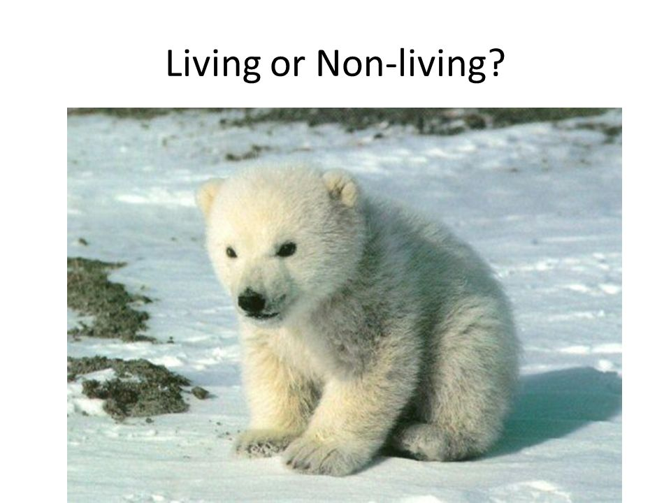 Living or Non-living?