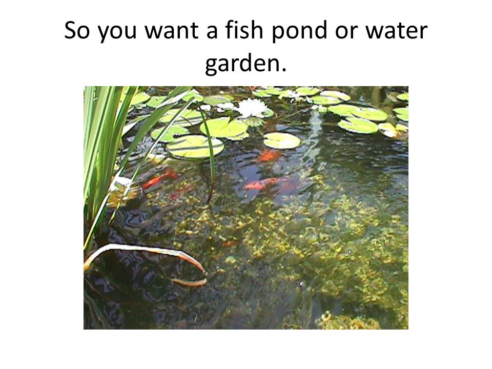 So you want a fish pond or water garden.
