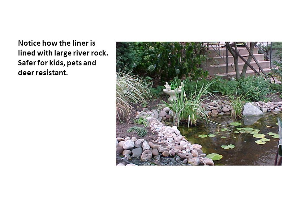 Notice how the liner is lined with large river rock. Safer for kids, pets and deer resistant.